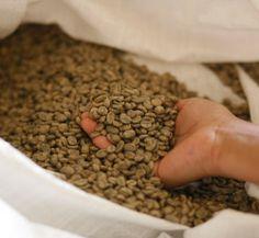 Bolsa de UTZ Certified granos de café