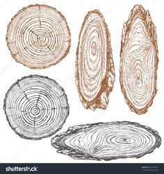 Round and oval cross section of tree trunk. Wooden texture with tree rings.  Hand drawn sketch.