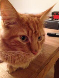 Mogli Katze | Pawshake