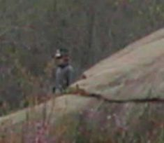 This picture was taken at the Devil's Den in Gettysburg... On 4-3-05. There were not any reenactors there at that time. I made for certain that during my trip, I did not take any pictures of anyone dressed in Civil War era clothing because I was there on a ghost hunting trip. The first photo is the full size picture, the second is a close-up of the soldier.