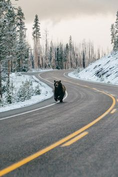 Tour de France has started! Animals And Pets, Funny Animals, Cute Animals, Meanwhile In Canada, Tier Fotos, Animal Kingdom, Funny Pictures, Random Pictures, Funny Pics