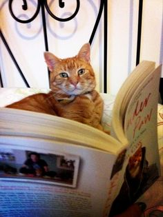 A cat who has got three chapter into my first cat book and has realised it doesn't like reading books any more and prefers computer games.