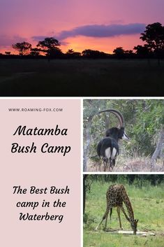 A discerning, quiet bush camp in the Waterberg biosphere. Why Bush Camping in your own tent at Matamba Bush Camp is worthwhile. Travel Goals, Travel Advice, Travel Guides, Fox Facts, Bush, Countries To Visit, Beautiful Places In The World, Photo Essay, Walking In Nature