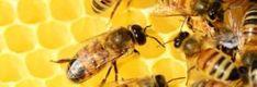 Arı ile ilgili Atasözleri – Açıklaması ve Anlamı
