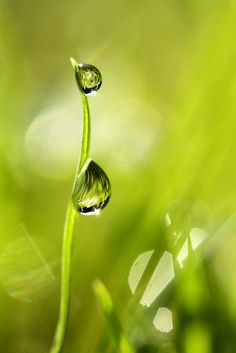 Green Grass and Droplets by Sharon Johnstone