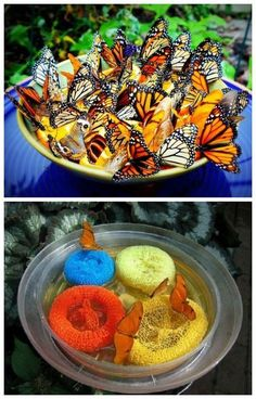 butterfly feeder food - Instant feeder for your garden made from sponges and plastic plate. Butterflies love red, orange, purple and yellow, they have good color vision.