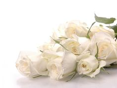White Rose HD Wallpapers & Pictures