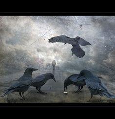 .five ravens