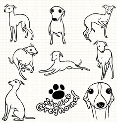 Italian greyhound vector