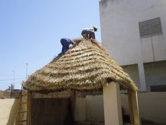 Roof thatching with vetiver grass by Vetiver Senegal Soil Conservation, Butterfly Weed, Youth Center, Creative Products, Rain Garden, Parcs, Homesteading, Gardening, Gardens