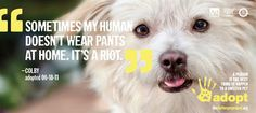 """Sometimes my human doesn't wear pants at home. It's a riot."""