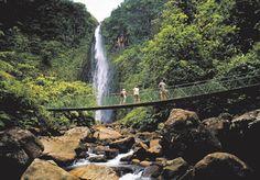 Walk on a Bridge, in Guadeloupe  #Bridge #Waterfall #GuadeloupeIslands