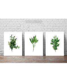 Ensemble de 3 herbes, aquarelle de thym, de sauge Giclee Fine Art Print, origan Marjolaine herbe Illustration vert cuisine Decor, herbes graphique