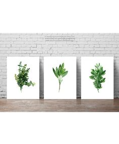 Set of 3 Herbs, Thyme Watercolor Painting, Sage Giclee Fine Art Print, Oregano Marjoram Herb Illustration Green Kitchen Decor, Herbs Chart