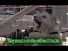 A homeless dog living on the railroad tracks gets rescued right before a train passes by. Please REPIN - every time you do, we get a small amount of money that helps us save more animals. Thanks! Eldad