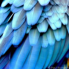 printed bird feathers - Bing Images