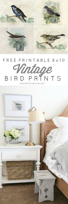 "Free Printable 8x10"" Vintage Bird Prints- add vintage charm to any room!"