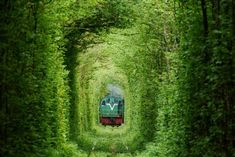 There are some places around the world that really catch our attention. One of this places it the Tunnel of Love, a train tunnel made entirely of trees. Tunnel Of Love Ukraine, Photo Japon, Places To Travel, Places To See, Train Tunnel, Magical Tree, Destination Voyage, Train Tracks, The Good Place