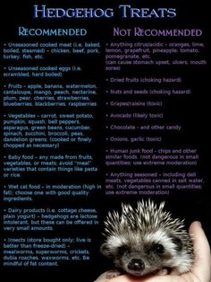 ♡ Safe and Unsafe Hedgehog Treats ♡