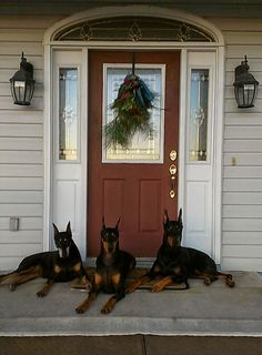I wish the front of my house looked like this! #Doberman love.