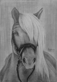 #koń#rysunek#horse#drawing#by#Jaro#Art