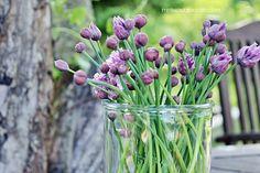 Ruohosipulinkukat maljakkoon Garden, Plants, Blog, Garten, Gardens, Lawn And Garden, Tuin, Plant, Planting