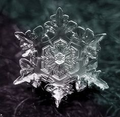 Snowflakegg