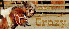 Лошади, Играть, Смешной, Животных, Пони