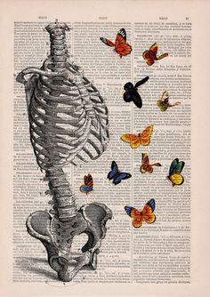 Human Skeleton Torso full of butterflies. Anatomy Print by PRRINT