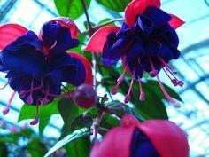citate cu felicitari cu flori - Google keresés