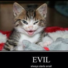 little and evil cat