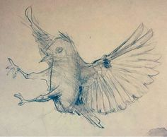 https://flic.kr/p/FT435c | flying bird, pencil drawing by Kirillnbb