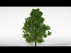 How to make a tree in Blender 2.72  easy !