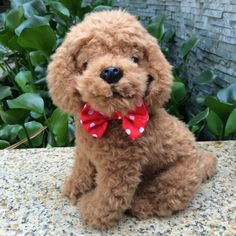 Cute Red Pet Products Cats Dog Tie Wedding Accessories Pet Dogs Bow tie Collar Pet Decoration - Like this? click here:  http://www.dogcollarsshop.com/product/cute-red-pet-products-cats-dog-tie-wedding-accessories-pet-dogs-bow-tie-collar-pet-decoration/
