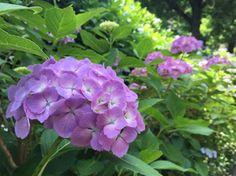 Kávézacc a kertben? 4 módon is felhasználhatjuk! Plants, Garden, Beautiful, Pictures, Garten, Planters, Gardening, Outdoor, Home Landscaping