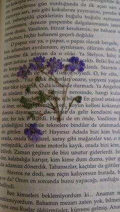 Yazdan kalma çiçekler  :) last summer