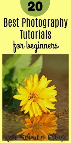 20 Best Photography Tutorials for Beginners - Mom Without a Village
