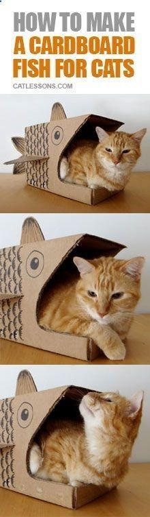 Cats Toys Ideas - ♥ Cat Care Tips ♥ Simple DIY to make a cool home shelter for your cat - Ideal toys for small cats
