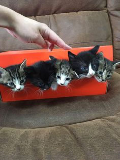 My cat had some cats!