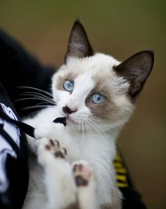 This looks like our kitty when he was a kitten <3