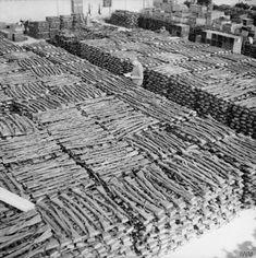 Captured german Kar98k rifles at Stavanger, Norway, 1945