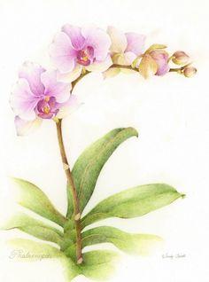 Botanical Illustration: Botanical Artistry Celebrated