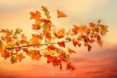 Entre coucher de soleil et ambiance rosée… Photo et flou naturel (1/15s et du vent) avec un coucher de soleil en fond, un des beaux spectacles de l'automne ;)