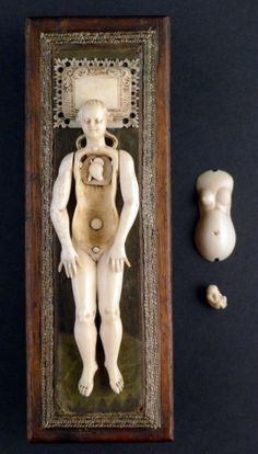 Anatomical Venus. Germany, late 17th century, ivory, wood, silk, silver thread. Elegant finely sculpted ivory anatomical manikin of a pregnant woman and her foetus For sale on www.fleaglass.com