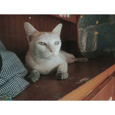 สำหรบเชาน #goodmorning #meow  #cat  #animal  #white  #vscocamthailand  #vscocam  #vscogood  #vsco by kksrrr http://www.australiaunwrapped.com/