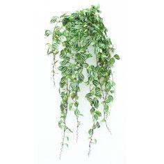 plante verte descendante