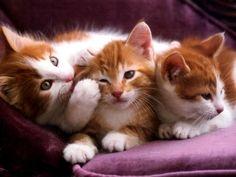 dicas pet shop: Nomes Para Gatos Com a Letra A