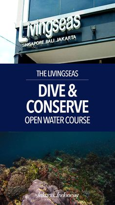 Dive & Conserve with Livingseas | Peek Holidays