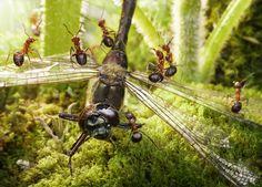 ALLPE Medio Ambiente Blog Medioambiente.org : Cuentos con hormigas