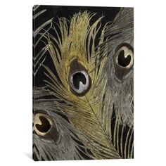 """Bungalow Rose Feather Fashion II Graphic Art on Wrapped Canvas Size: 18"""" H x 12"""" W x 0.75"""" D"""